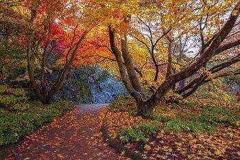 Fall colors. Photo: flickr.com/photos/hopvanphan/15862291544