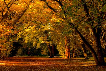 The fall equinox marks the beginning of fall. Photo: flickr.com/photos/16516058@N03/8128117868